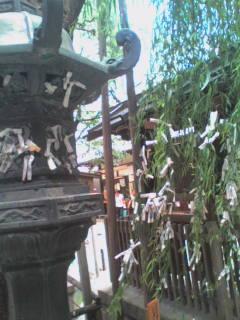 六角堂の縁結びの柳