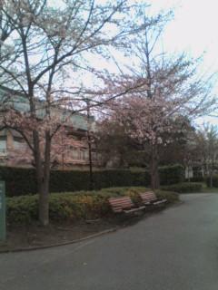 雨の京都は5分咲き